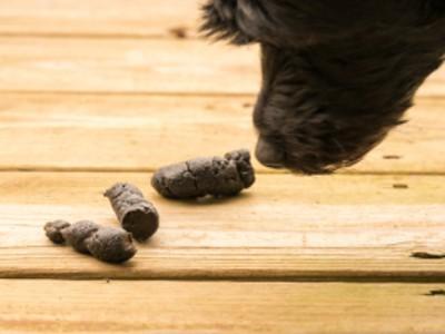 Hund-stubenrein
