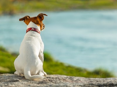 Hund-entlaufen