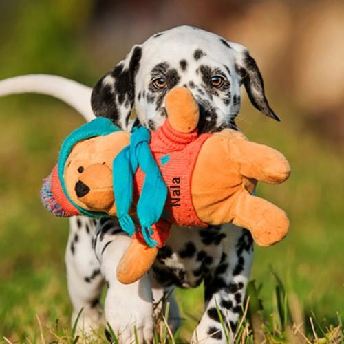 0431375c4b1c3b Plüschtiere für Hunde günstig kaufen bei Dog-Play | Dog-Play Hundeshop